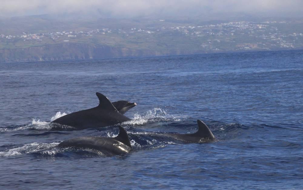 Alberto T Viaje a la Atlantida Verano 2016 Delfines mulares