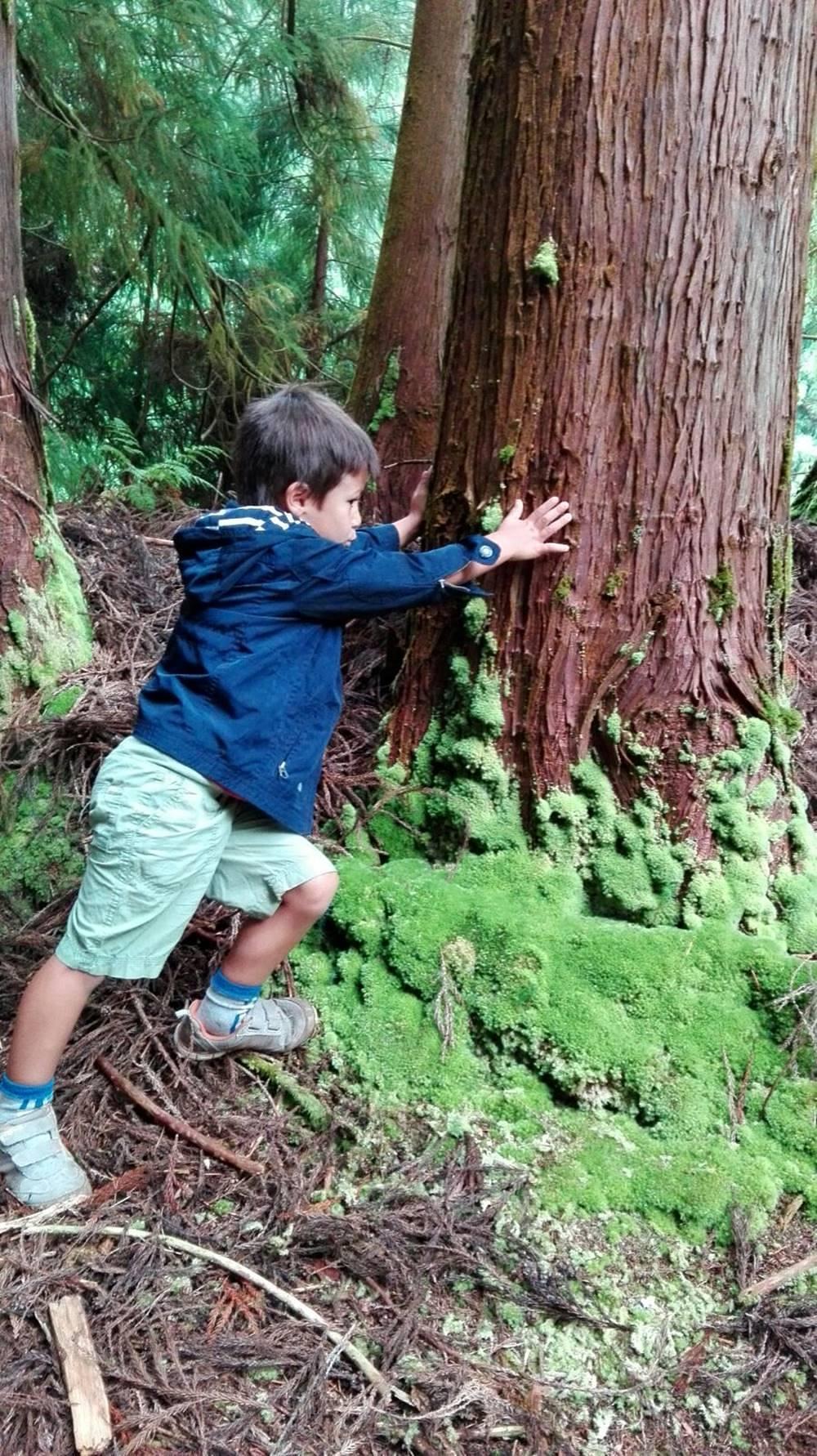 Eva Maria B Viaje a la Atlantida El bosque magico