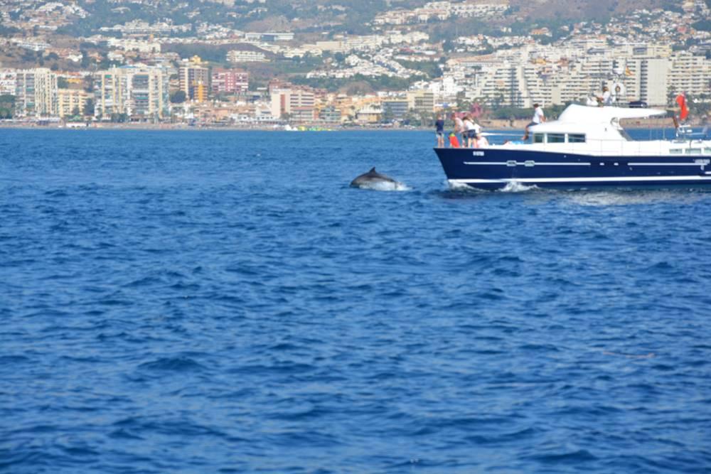 Jose Ramon T Costa del Sol VIP Verano 2016 Capitan delfin